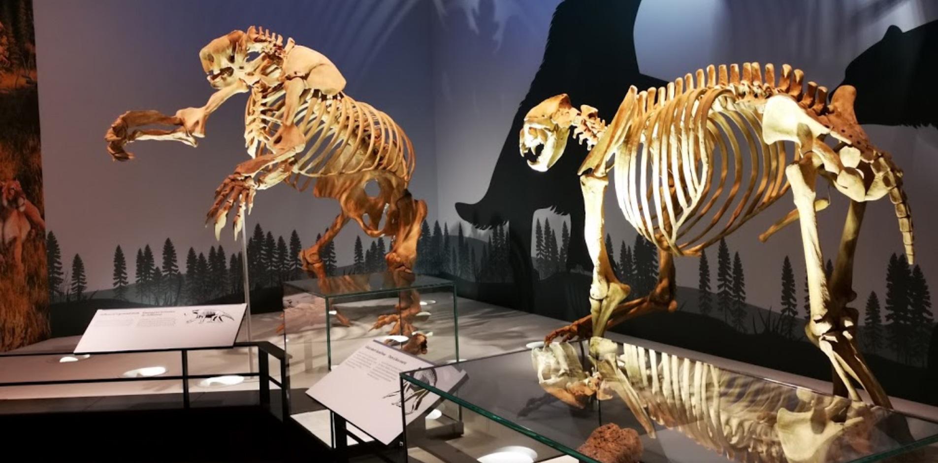 Royal Alberta Museum Exhibits